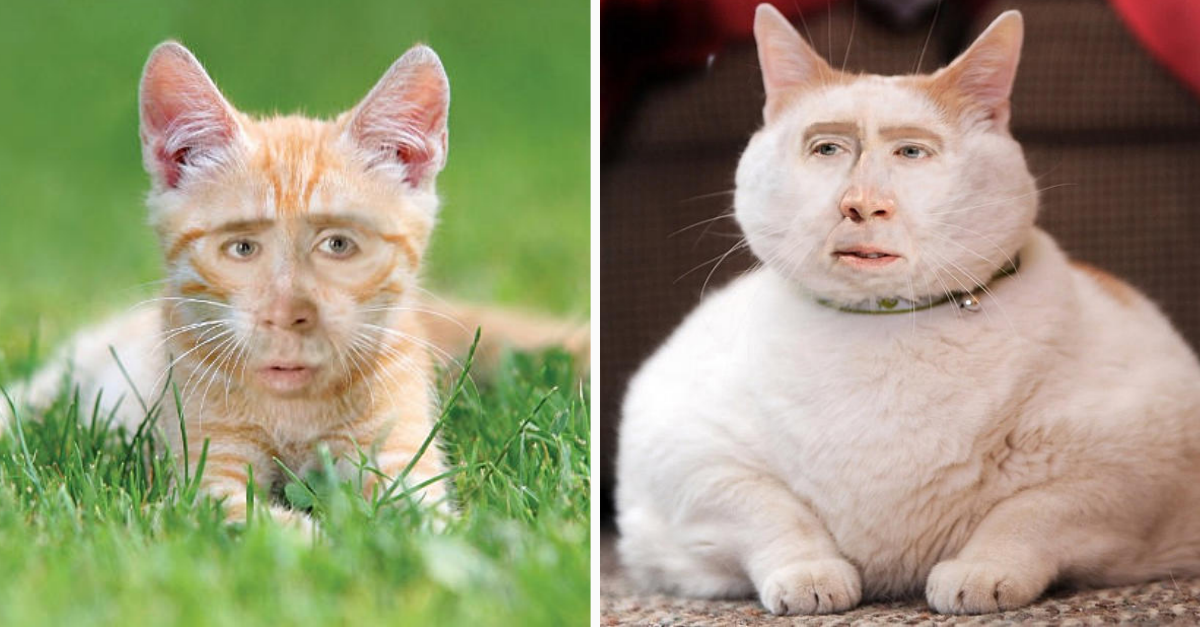 Internet Photoshopped Nicolas Cage's Face Into Cats & It's ...