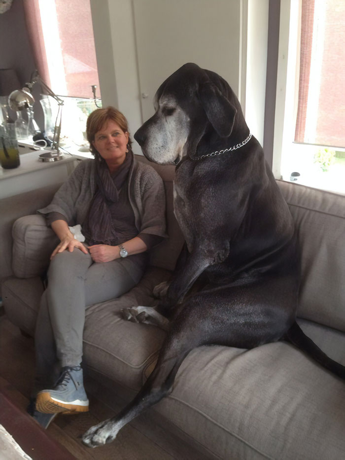 6-great-dane-comfortable-couch|RearFront